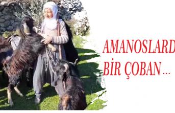 Amanoslarda Bir Çoban...