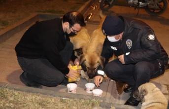 Hatay'da hayvanseverler, kısıtlamadan dolayı aç kalan sokak hayvanlarını besledi