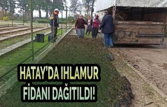 Hatay'da Ihlamur Fidanı Dağıtıldı!