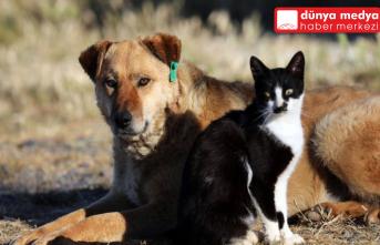 Hayvanları Koruma Kanunu Sonunda Meclise Getirildi!