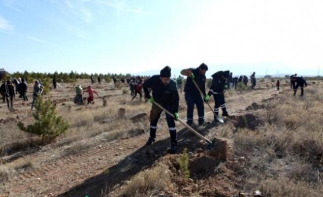Büyükşehir Ulaşım AŞ'den Hatay'a 700 fidan