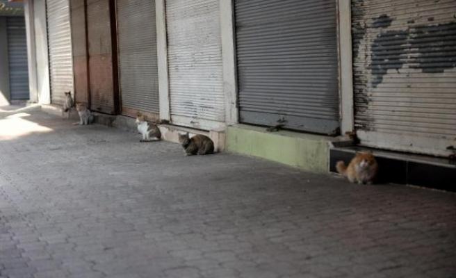 Hatay'da Sokaklar Hayvanlara Kaldı!