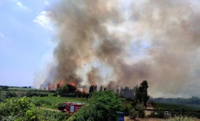 Samandağ'da çıkan sazlık yangını    kontrol altına alındı