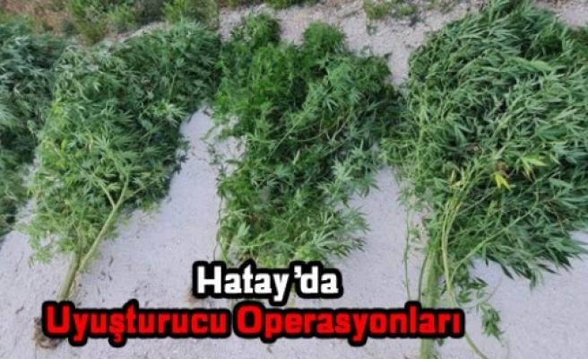 HATAY'DA    UYUŞTURUCU OPERASYONLARI!