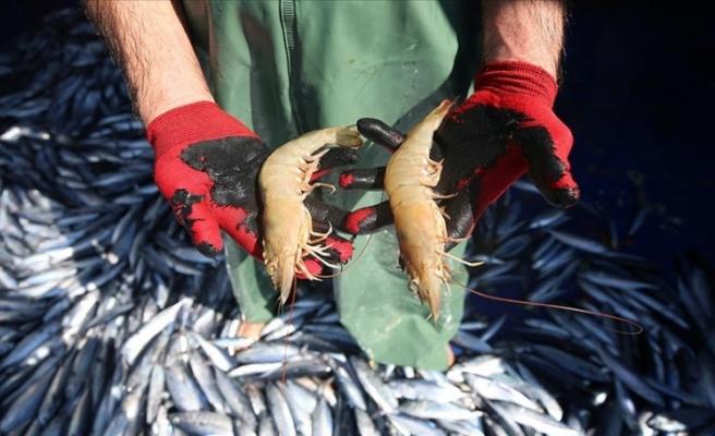 İskenderun'da Ağlara takılan jumbo   karides balıkçıların yüzünü güldürüyor