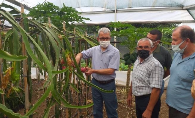 Payas Kaymakamından   Tropikal Meyve Bahçesine Ziyaret