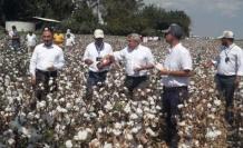 Hatay'da Tarla Günü'nde   pamuk hasadı yapıldı