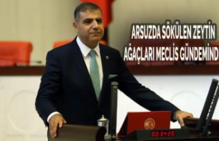 Arsuz'da Sökülen Zeytin Ağaçları Meclis...