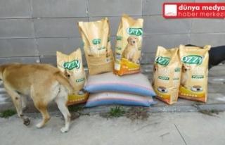 Sokak Hayvanlarını Besledi, Cezadan Kurtuldu!