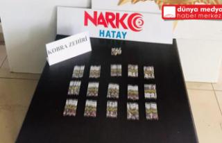 Hatay'da 156 tüp Kobra zehri ele geçirildi