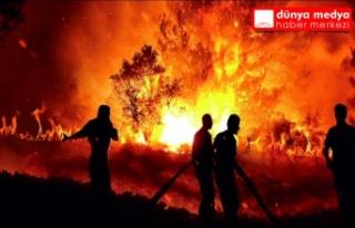Hatay'daki orman yangınları belgesel oldu