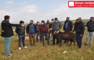 Reyhanlı'da besicilere sahada 'sürü yöneticiliği'...