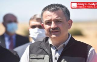 Bakan Pakdemirli Hatay'da Buğday hasadına katıldı