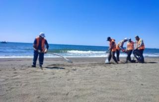 Hatay sahilinde petrol atıklarını temizleme çalışmalarında...