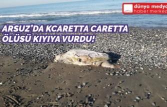 Arsuz'da Caretta Caretta Ölüsü Kıyıya Vurdu!