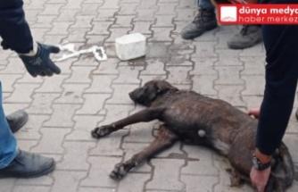 Payas'ta Sanayi Esnafı Yaralanan Köpeğe Sahip Çıktı!