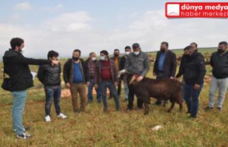 Reyhanlı'da  besicilere sahada   'sürü yöneticiliği' kursu