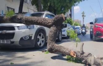 Antakya'da üzerine ağaç   devrilen otomobilde hasar oluştu