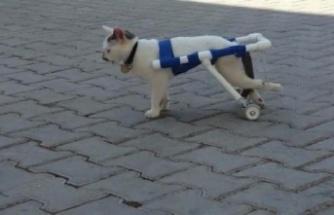 Engelli hayvanlar için ücretsiz yürüteç yapıyor