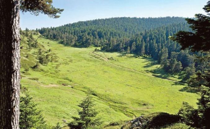 """STK'lerin düzenlediği kampanyayla Hatay'da """"Turizm Ormanı"""" kurulacak"""