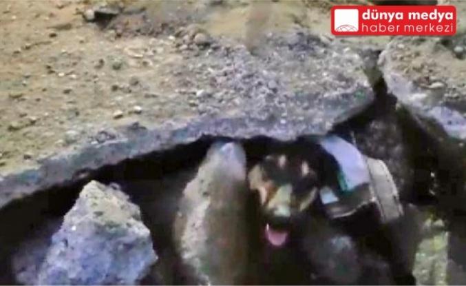 İskenderun'da Beton Bloğun Altına Sıkışan Köpeği İtfaiye Kurtardı!