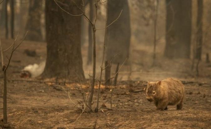 Yangınlar Neden Oluyor? İklim Krizi mi? Terör mü?