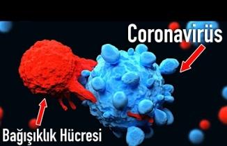 Bağışıklık Sistemi Koronavirüsle Nasıl Savaşır?